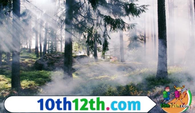 वन एवं वन्य जीवन संसाधन, कक्षा-10, पाठ-1