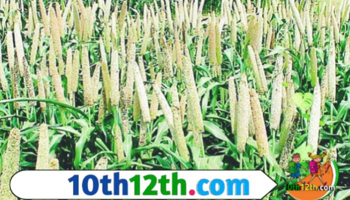 भू संसाधन तथा कृषि फसल Ncert Class 10 पाठ-4