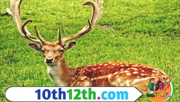 वन एवं वन्य जीवन संसाधन कक्षा-10, पाठ-1